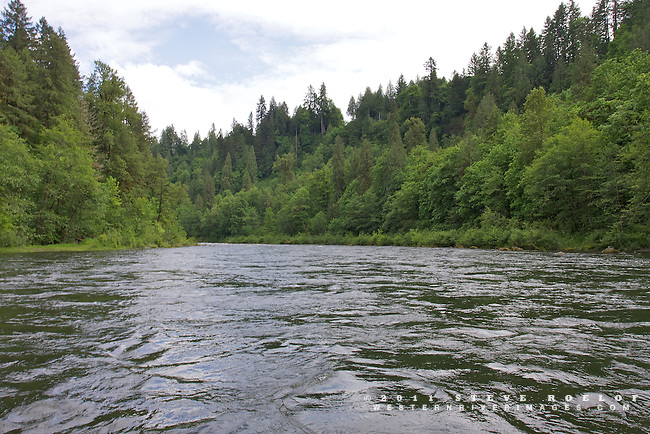 The green of spring along the Sandy River, Oregon.