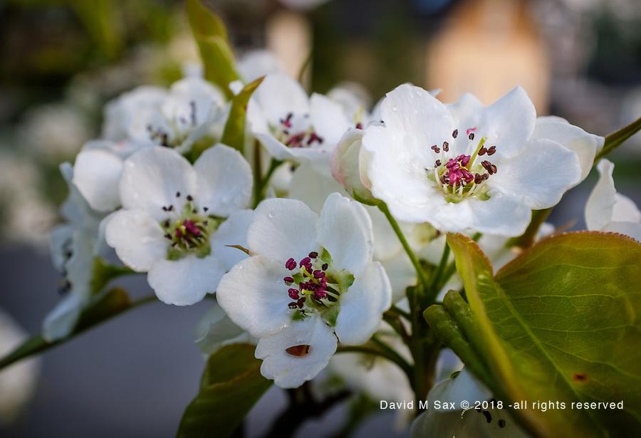 4.10.17 - Blooming...