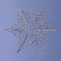 Snowflakes - Fernlike Stellar Dendrites