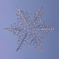 Snowflake Saiph - Fernlike Stellar Dendrite Snowflake