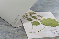 Fertige Herbarbögen, Herbarbogen werden in einer Kladde nach Familien sortiert, Pflanzenfamilie. Botanik, Botanisieren, botany, Herbar, herbaria, Herbarien, herbarisieren, herbier, Pflanzenbestimmung, Pflanzenherbar