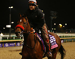 November 01, 2018 : Lady Prancealot in preparation for the Breeders' Cup on November 01, 2018 in Louisville, KY.  Candice Chavez/ESW/CSM