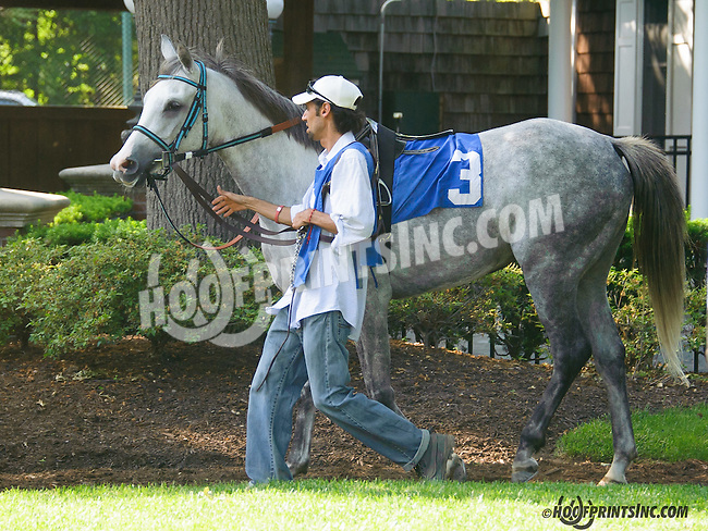 Charich in the paddock at Delaware Park on 5/30/15