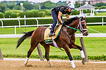 JUNE 05, 2019 : Bourbon War morning workouts for Belmont Stakes contenders at Belmont Park, on June 5, 2019 in Elmont, NY.  Sue Kawczynski_ESW_CSM