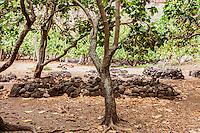 Ancient Hawaiian burial sites in Nualolo Kai village, Na Pali coast, Kauai
