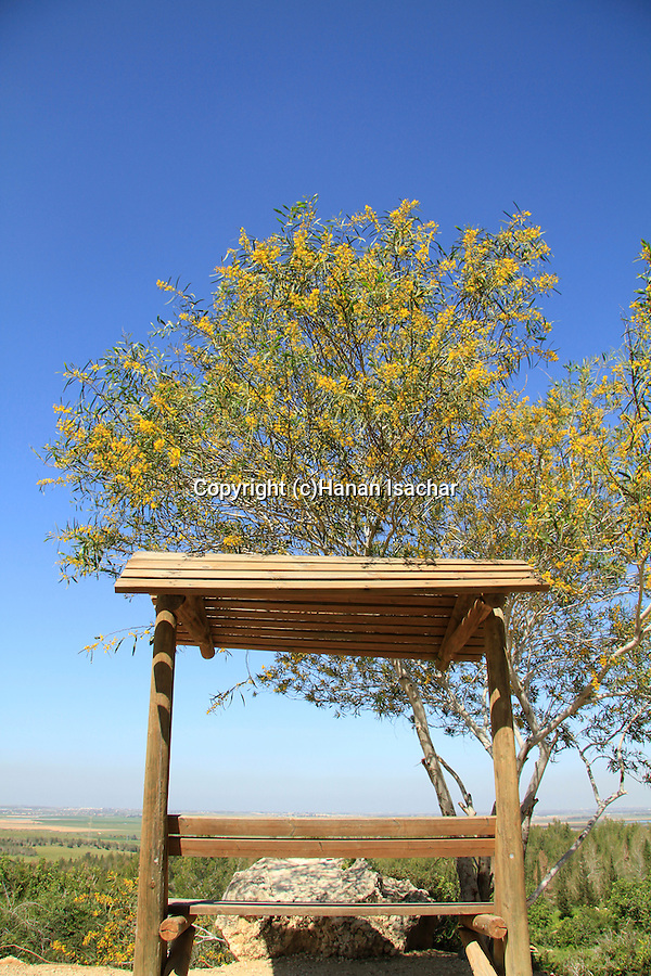 Israel, Shephelah, Yehonatan lookout in Haruvit forest