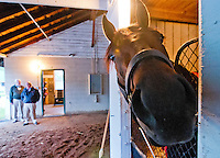 Orb, the probable Kentucky Derby favorite, in his stall at Churchill Downs during Derby Week April 29, 2013.