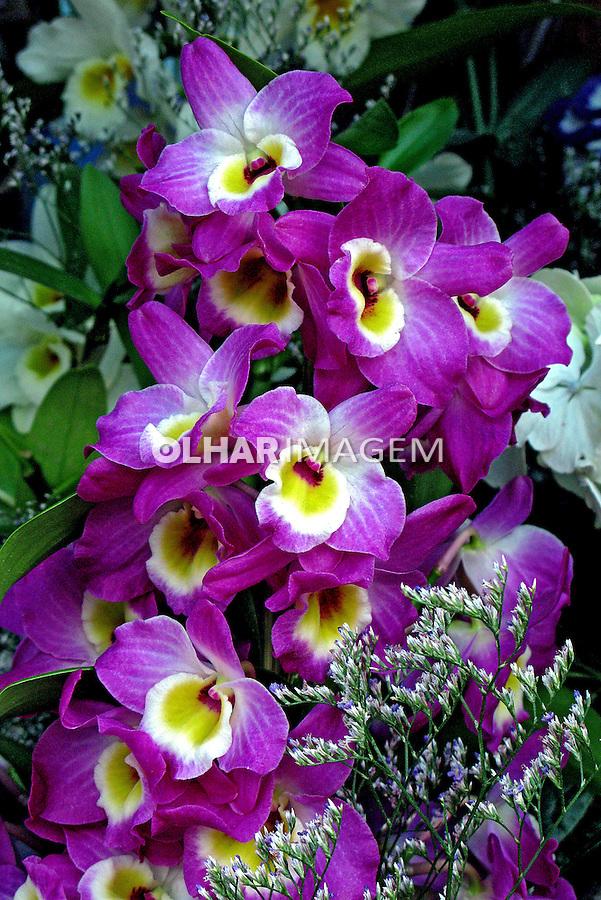 Flores. Orquídeas. SP. Foto de Manuel Lourenço.