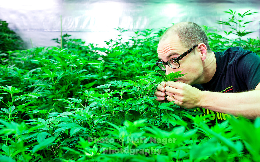 "Reporter Harry Wallop in the Medicine Man ""Green Mile"" marijuana grow house during a Colorado Cannabis Tour in Denver, Colorado, Friday, September 30, 2016. <br /> <br /> Photo by Matt Nager"