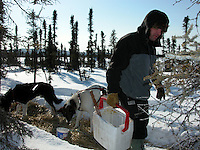 Jon Little.Cim Smyth feeds his dogs a mixture of turkey skins and hot water aftef arriving at Cripple, March 9, 2006