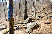Trail blaze painted on tree along the Frankenstein Cliff Trail in the White Mountains of New Hampshire during the spring months. A proper blaze is a two by six inch rectangle.