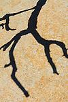 Shadow of tree branch on granite rock, Joshua Tree National Park, California