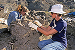 Tanya Stay & Donna Rothberg Working On Triceratops