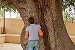 Israel, Upper Galilee. Kermes Oak (Quercus Caliprinos) in Jat