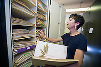 Lisa Wallace, associate professor of biological sciences, peruses the MSU Herbarium in Harned Hall. Wallace serves as curator of the collection of more than 30,000 vascular plant specimens. Available for viewing by appointment, all specimens in the collection have been digitized and label data processing is ongoing.<br />
