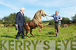 Minister Jimmy Deenihan and Johnny Mulivihill try to calm the Stallion at the Kerry Bog Pony show and sale in Glenbeigh on Saturday..