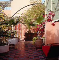 A red and black chaise-longue is placed in the shade on the roof terrace which is filled with palms and bougainvillea
