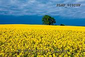 Marek, LANDSCAPES, LANDSCHAFTEN, PAISAJES, photos+++++,PLMP01010W,#L#, EVERYDAY