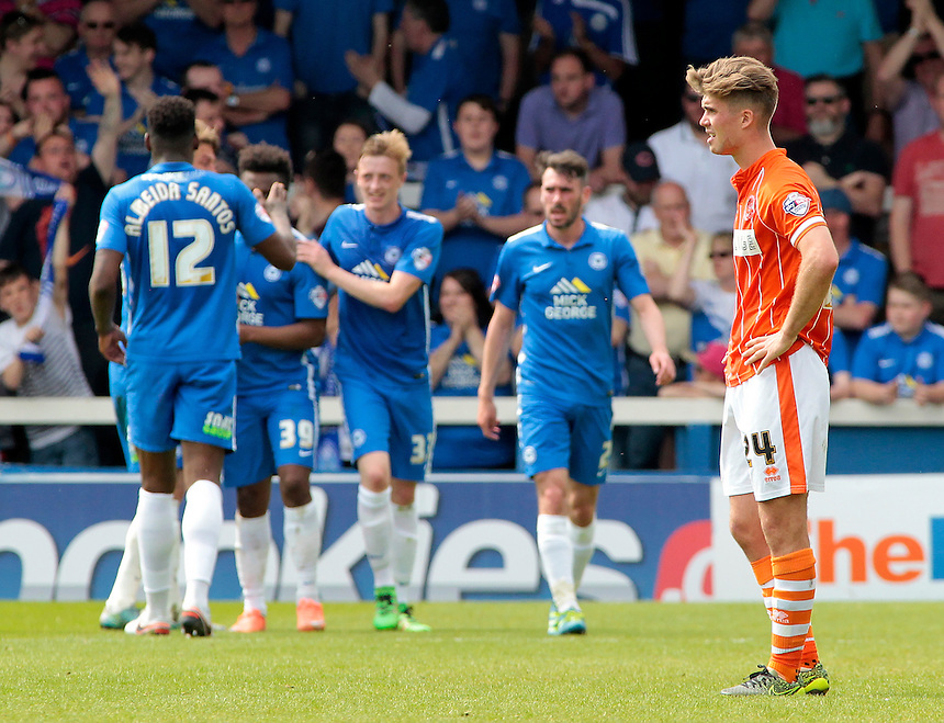 Blackpool's Luke Higham  looks dejected as Peterborough United celebrate going 4-1 ahead<br /> <br /> Photographer David Shipman/CameraSport<br /> <br /> Football - The Football League Sky Bet League One - Peterborough United v Blackpool  - Sunday 8th May 2016 - ABAX Stadium - London Road   <br /> <br /> &copy; CameraSport - 43 Linden Ave. Countesthorpe. Leicester. England. LE8 5PG - Tel: +44 (0) 116 277 4147 - admin@camerasport.com - www.camerasport.com