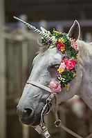 RAM Rodeo'16 HorsePower 2016