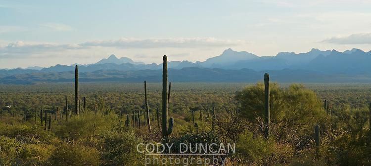 Desert landscape of Baja California, Mexico