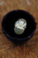 Fiori. Flowers. Cactus...