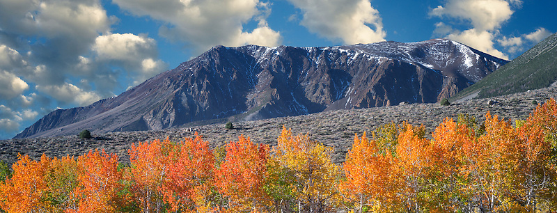 Bloody Canyon. aspen trees in fall color. Eastern Sierra Nevada Mountains, California