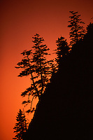 A photo of silhouetted Douglas Fir trees at sunset in the Mount Hood National Forest in Oregon