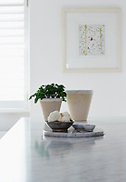 Fresh garlic and a potted basil plant on the marble counter of the kitchen island