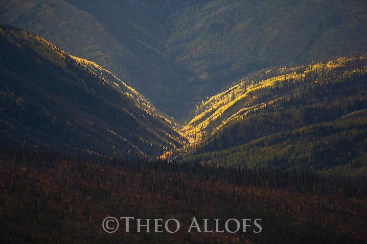 "Fall colors on hills along the ""Top of the World Highway""  between Dawson City/Yukon and Tok/Alaska; backlit scene, spot lighting"