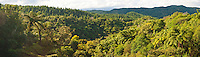 Panoramic Photo of Tropical Rainforest in the Waikato Region of North Island, New Zealand. This panoramic photo shows the tropical rainforest that be found on the North Island of New Zealand.