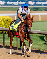 LOUISVILLE, KENTUCKY - MAY 01: Gunnevera, owned by Peacock Stables, LLC and trained by Antonio Sano, exercises in preparation for the Kentucky Derby  at Churchill Downs on May 1, 2017 in Louisville, Kentucky. (Photo by Jesse Caris/Eclipse Sportswire/Getty Images)