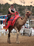Forrest Bell-Semteney competes on media day at the International Camel Races in Virginia City, Nev., on Friday afternoon, Sept. 7, 2012. The 53rd annual event continues Saturday at 1 p.m. and at noon on Sunday..Photo by Cathleen Allison