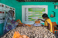 Collection centre workers grade potatoes and pack them for sale in the collection centre in Machahi village, Muzaffarpur, Bihar, India on October 27th, 2016. Non-profit organisation Technoserve works with women vegetable farmers in Muzaffarpur, providing technical support in forward linkage, streamlining their business models and linking them directly to an international market through Electronic Trading Platforms. Photograph by Suzanne Lee for Technoserve