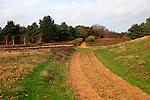 Sandlings heathland path Sutton Heath, Suffolk, England, UK