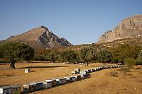 An apiary in Preveli in Crete. Crete has been known for its thyme honey since Antiquity.<br /> Un rucher pr&egrave;s de Preveli en Cr&ecirc;te. La Cr&ecirc;te est r&eacute;put&eacute;e pour son miel de thym depuis l&rsquo;antiquit&eacute;.