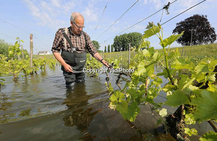 Foto: VidiPhoto<br /> <br /> DODEWAARD - Teveel water bij de wijn... De enige wijngaard van Nederland die onder water staat is Villa Hehum in Dodewaard, maar het werk gaat donderdag gewoon door. Door de hoge waterstand van de Waal staat de uiterwaarde op diverse plaatsen blank. In de winterperiode is dat niet ongebruikelijk, maar in juni is dat in 1985 voor het laatst voorgekomen. De eigenaar van de wijngaard bij restaurant De Engel, Inno Venhorst, laat echter het geplande en al verlate snoeiwerk doorgaan, in de hoop dat zijn 3000 vierkante meter grote wijngaard het overleeft. Als de wortels te lang geen zuurstof krijgen, sterven de druivenstruiken af, met duizenden euro's schade als gevolg.