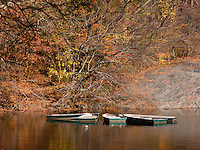 Rowingboats moored on lake in Central park. New York, USA.