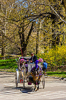 Horse drawn carriage, Central Park, New York, New York USA.