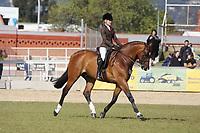 Champion Hunter Horse