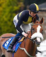 Inclyne  ridden by David Probert goes down to the start  of The Sorvio Insurance Brokers Maiden Stakes during Evening Racing at Salisbury Racecourse on 11th June 2019