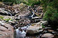 Image Ref: CA296<br /> Location: Sheoak Hike, Great Ocean Road<br /> Date of Shot: 26.04.18