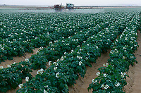 EGYPT, Farafra, potato farming in the desert, herbicide and pesticide spraying at United Farms, irrigated with  fossile groundwater from the Nubian Sandstone Aquifer which is pumped from 1000 metres deep wells   / AEGYPTEN, Farafra, United Farms, Kartoffelanbau in der Wueste, Spruehen von Herbiziden und Pestiziden, die kreisrunden Felder werden mit Pivot Kreisbewaesserungsanlagen mit fossilem Grundwasser des Nubischer Sandstein-Aquifer aus 1000 Meter tiefen Brunnen bewaessert