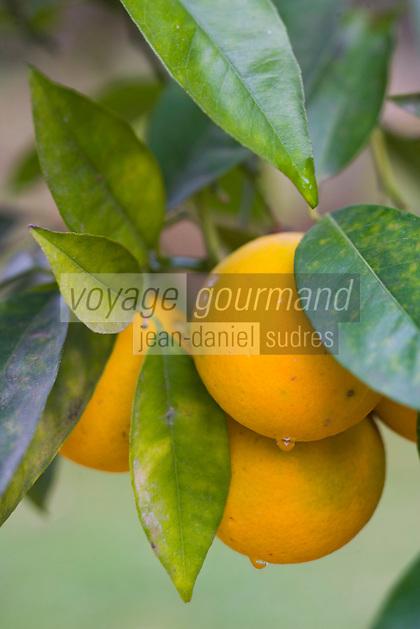 Afrique/Afrique du Nord/Maroc/Rabat: Hotel - Maison d'Hote Villa Mandarine -Oranges dans l'Orangeraie du parc