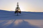 Lonesome tree in the snow landscape of hills in Biei.<br /> <br /> Seul arbre dans le paysage de neige des collines à Biei.