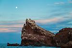 Los Islotes in Baja California Mexico
