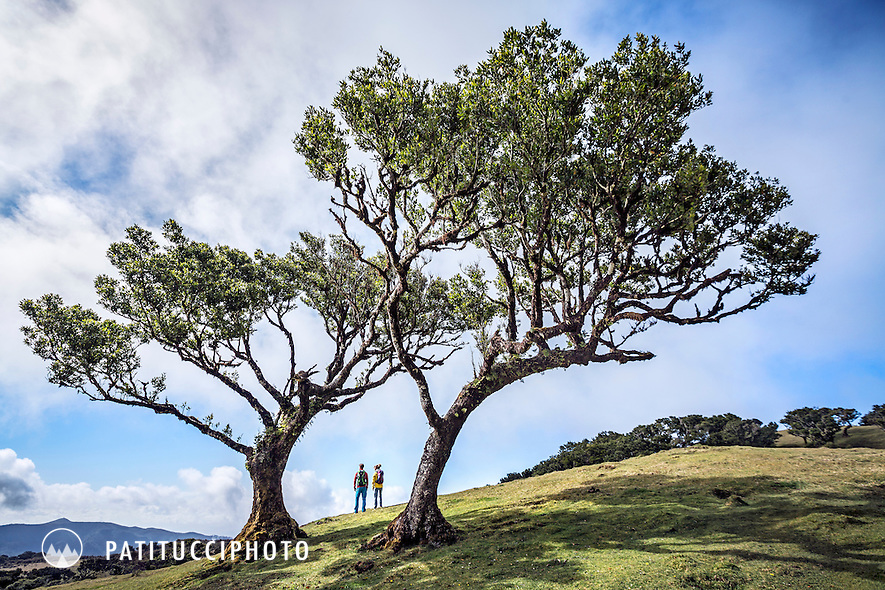 Hiking through the trees of Fanal, a forest of interesting shaped trees on Madeira Island