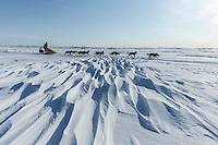 Mitch Seavey on a lagoon near Topkok on his way to Safety and Nome on Tuesday March 12, 2013...Iditarod Sled Dog Race 2013..Photo by Jeff Schultz copyright 2013 DO NOT REPRODUCE WITHOUT PERMISSION
