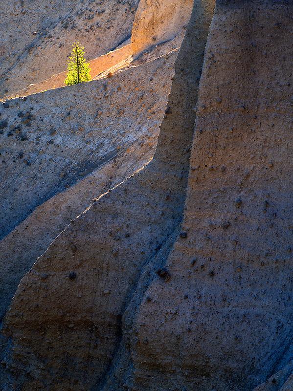 Lone backlit tree. Crater Lake National Park, Oregon