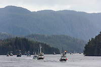 Fleet of seiner boats reposition during the Sitka Sac Roe Herring fishery.